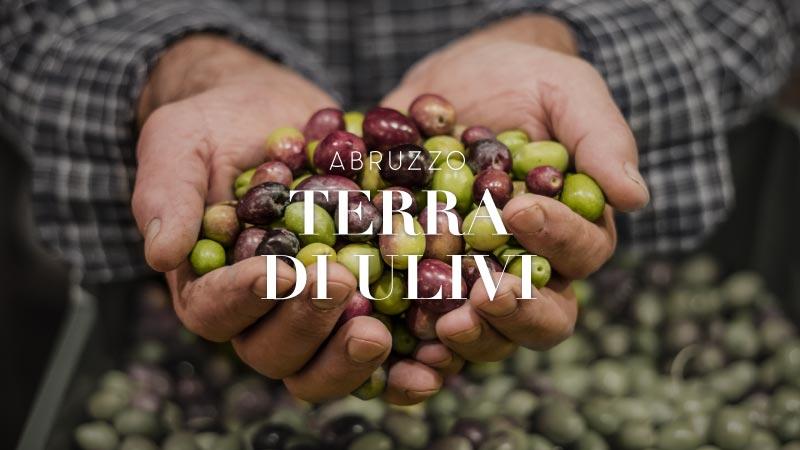Abruzzo terra di ulivi e olio - Hotel Cristallo Giulianova