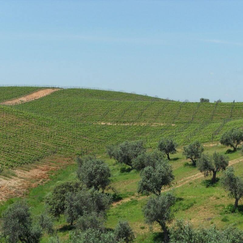 Olio e vino d'Abruzzo - Hotel Cristallo Giulianova